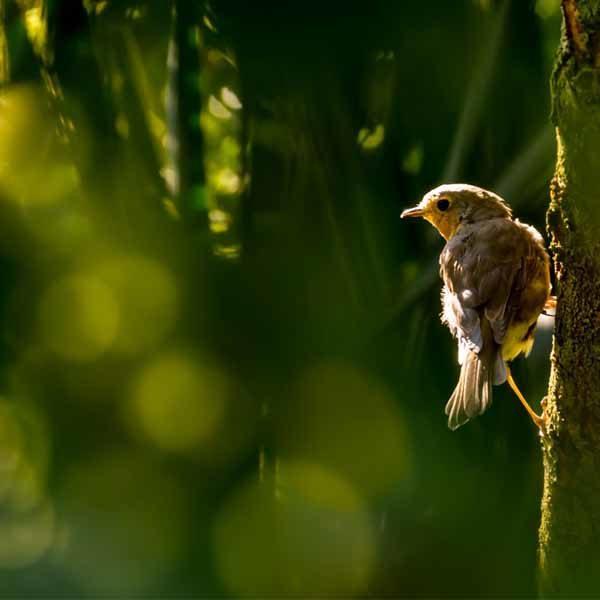 Bird View